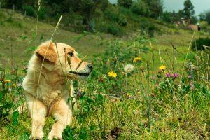 10 plantes nocives animaux compagnie