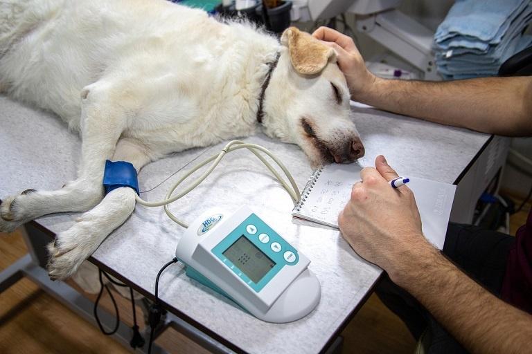 mesure pression artérielle vétérinaire