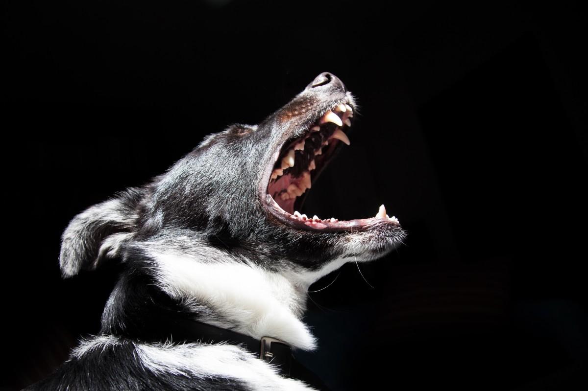 soin dentaire chien et chat